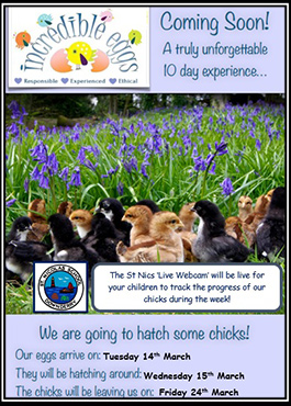 Chicks hatching past event